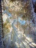 Zmierzch w drewnie między drzewami Obrazy Stock