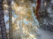 Zmierzch w drewnie między drzewami Fotografia Stock