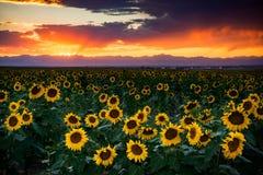 Zmierzch W Kolorado Jest rajem zdjęcie royalty free
