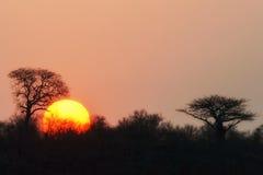 Zmierzch w Kruger parku narodowym, Południowa Afryka Zdjęcie Stock