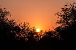 Zmierzch w Kruger parku Południowa Afryka Zdjęcie Stock