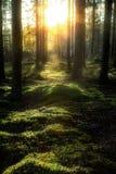 Zmierzch w lesie Fotografia Stock