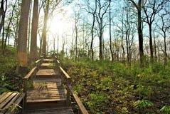 Zmierzch w lesie Zdjęcie Royalty Free