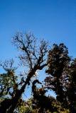 Zmierzch w lesie tropikalnym z drzewną sylwetką Obrazy Royalty Free