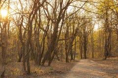 Zmierzch w lesie w wiośnie Obrazy Royalty Free