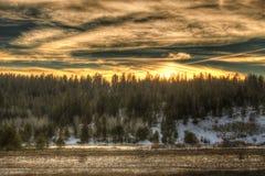 Zmierzch w lesie z śniegiem i odbija stawem Obraz Stock