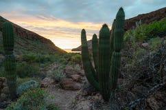 Zmierzch w meksykańskiej pustyni obraz stock