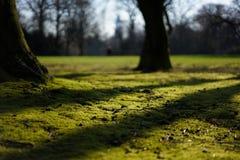Zmierzch w parku zdjęcia royalty free