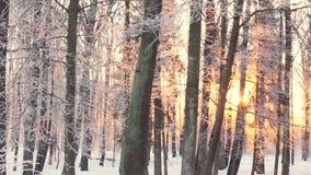 Zmierzch w parku, drzewa zakrywający z śniegiem Parkowi drzewa zakrywający z białym śniegiem zbiory