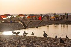 Zmierzch w plaży Fotografia Stock