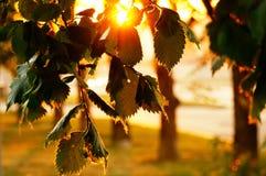 Zmierzch wśród drzew w parku Zdjęcie Royalty Free