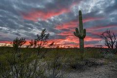 Zmierzch w Saguaro parku narodowym Tucson Obrazy Royalty Free