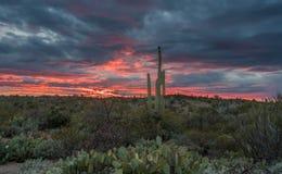 Zmierzch w Saguaro parku narodowym Tucson Zdjęcie Stock