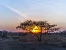 Zmierzch w Serengeti parku narodowym Zdjęcie Royalty Free