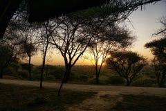Zmierzch w stepie Tanzania Fotografia Stock