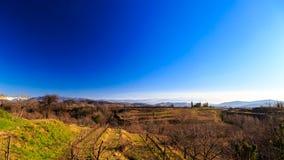 Zmierzch w winnicach Collio, Włochy Zdjęcia Stock