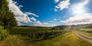 Zmierzch w winnicach Friuli Venezia Giulia Zdjęcia Stock
