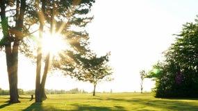 Zmierzch w zielonym parkowym słońca świetle Obrazy Royalty Free