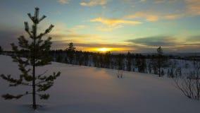 Zmierzch w zima lesie zdjęcie wideo