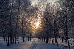 Zmierzch w zima parku. Zdjęcia Royalty Free