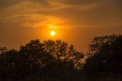Zmierzch wewnątrz za drzewami, Południowa Afryka Obraz Stock