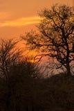 Zmierzch wewnątrz za drzewami, Południowa Afryka Fotografia Royalty Free