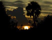 Zmierzch z chmurami i drzewkiem palmowym przy Merritt wyspy obywatelem Dzikim zdjęcie royalty free