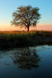 Zmierzch z drzewem i odbiciem Zdjęcie Royalty Free