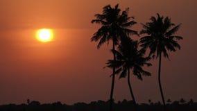 Zmierzch z drzewkami palmowymi i boja zbiory