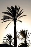 Zmierzch z drzewkiem palmowym Obraz Royalty Free