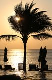 Zmierzch z drzewkiem palmowym Obrazy Royalty Free