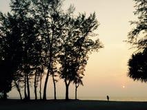 Zmierzch z dużym drzewem Zdjęcia Stock