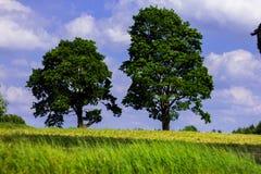 Zmierzch z dwa dębowymi drzewami obraz stock
