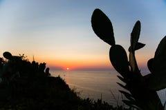 Zmierzch z kaktusową figą na tle, stromboli, tropea fotografia royalty free