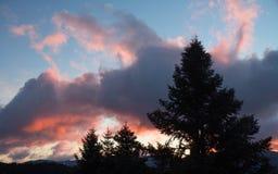 Zmierzch z piękną różową pomarańcze barwi na śnieżnej górze z jedlinowymi drzewami w przedpolu obrazy stock
