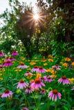 Zmierzch z pięknymi kwiatami w ogródzie zdjęcia stock