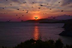 Zmierzch z sylwetka ptaków latać Obraz Royalty Free