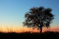 Zmierzch z sylwetkowym drzewem Zdjęcia Royalty Free