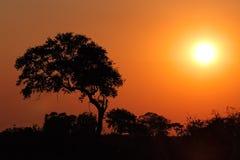 Zmierzch z sylwetkowym drzewem Fotografia Stock