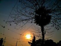 Zmierzch za drzewem w wieczór obraz stock