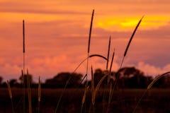 Zmierzch za trawą i drzewami w Afryka Zdjęcia Stock