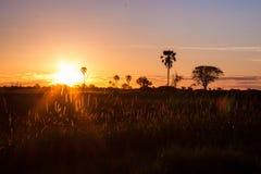Zmierzch za trawą i drzewami w Afryka Zdjęcie Stock