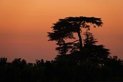 Zmierzch za treesin Provins w Francja Obraz Stock