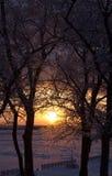 Zmierzch zimy słońce na tle śnieżyści drzewa Zdjęcia Stock