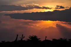 Zmierzchu afrykanina sawanna Zdjęcie Stock