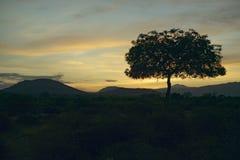 Zmierzchu Akacjowy drzewo w Tsavo parku narodowym, Kenja, Afryka Zdjęcia Stock