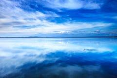Zmierzchu błękita krajobraz. Małego perkoza nurkowy ptak w lagunie. Orbetello laguna, Argentario, Włochy. Zdjęcie Royalty Free