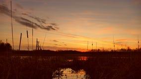 Zmierzchu czasu upływu wody rzecznej trawy słońca natury krajobraz zbiory wideo