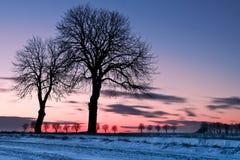 zmierzchu drzew zima Obrazy Stock
