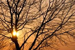 zmierzchu drzewa zima obraz stock